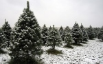 Christmas Tree Proforged